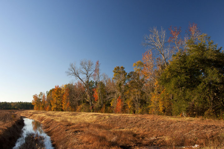Galilee A Hunting Property Located Between Charleston And