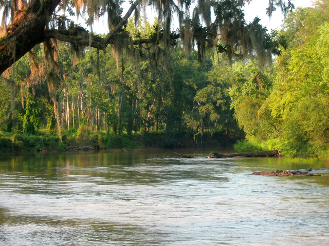 Mulgahatchee Plantation is a hunting and timber property ...