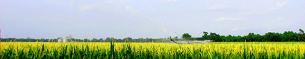 Farm land: Irrigated corn field