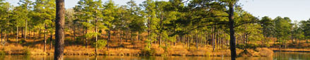 Hunting, farm and plantation property in Alabama