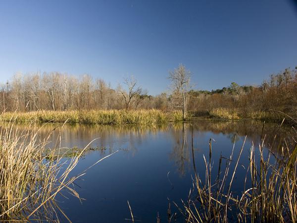 Oatland Located Near Goergetown Sc Is A Duck Hunting
