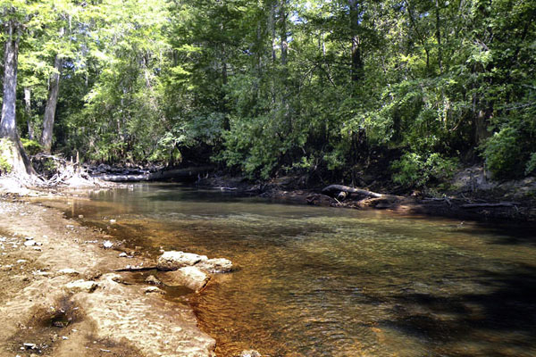 Twin Creeks Hunting Plantation For Sale In Southwest Georgia