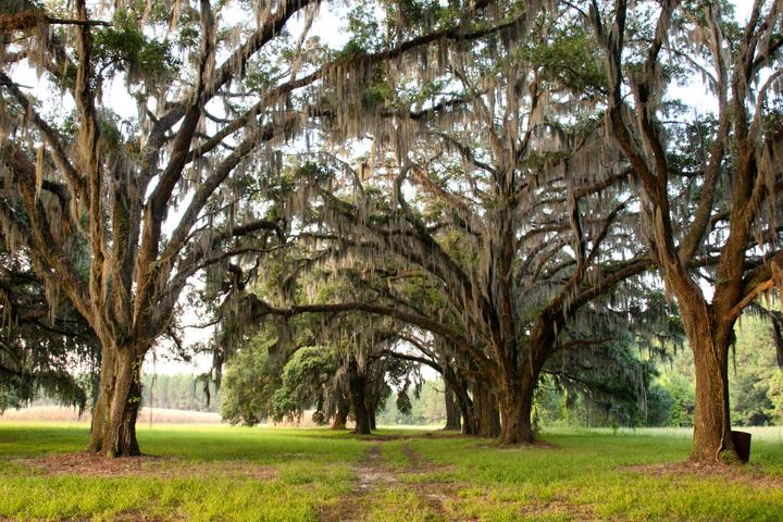 The Pineland Plantation 800 Acres Hampton County South