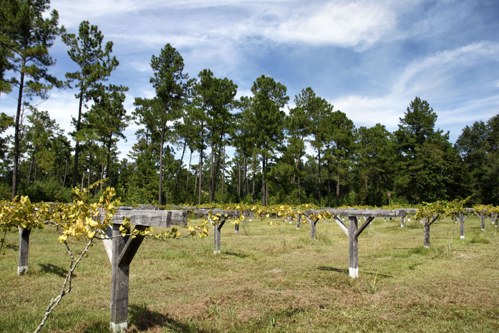 Weehaw Plantation 1028 6 Acres Georgetown County